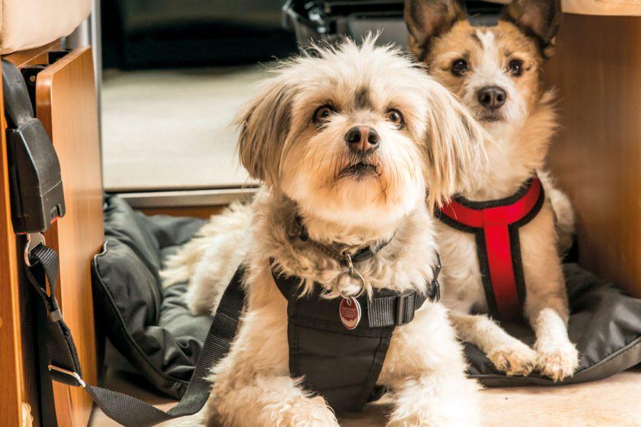 Zwei Gurtschlösser im vorderen Bodenbereich ermöglichen eine zusätzliche sichere Befestigung der Hunde während der Fahrt. Hierzu wird ein entsprechendes Sicherheits-Schutzgeschirr benötigt.