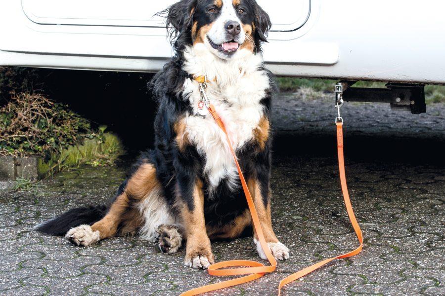 Zwei Anschlagringe außen am Fahrzeug ermöglichen die Befestigung des Hundes mit einer Leine.