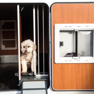 Rear exterior door with integrated window for opening, insect net and another protective grid to secure the dog.