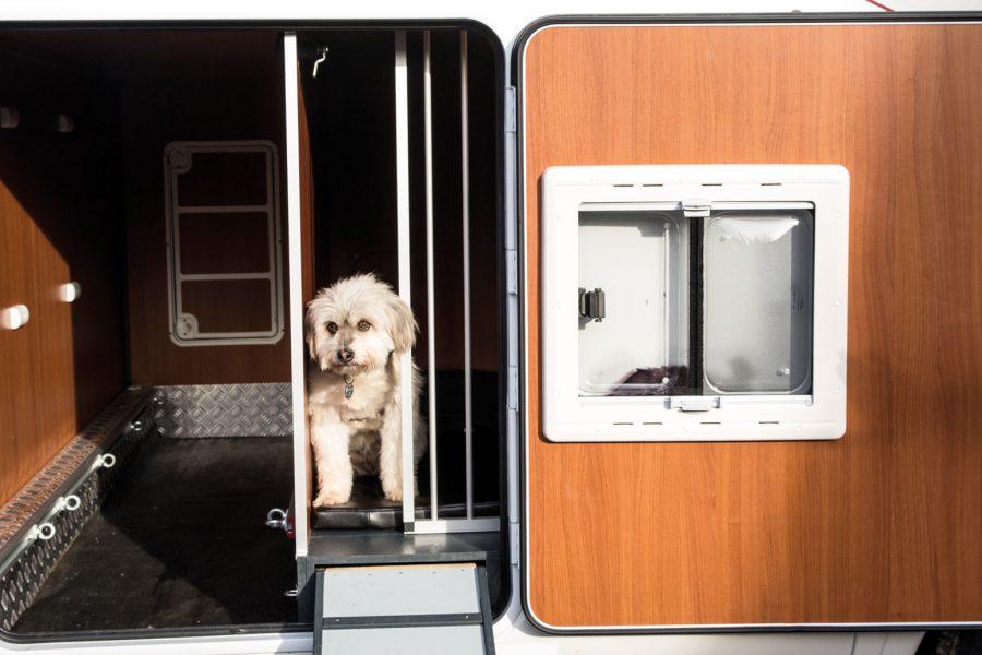 Hintere Außentür mit integriertem Fenster zum Öffnen, Insektenschutznetz und einem weiteren Schutzgitter zur Sicherung des Hundes.